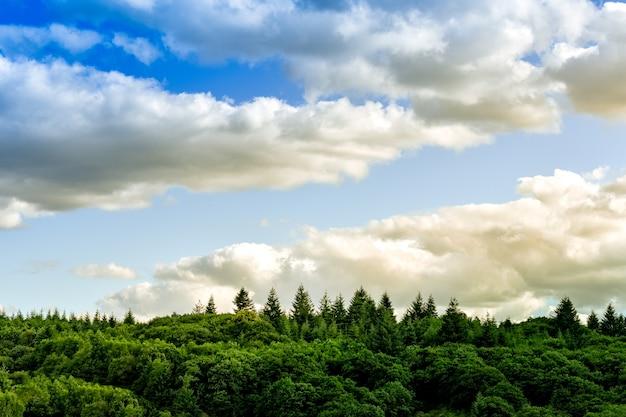 Barckground colorido e mínimo da paisagem. nuvens e pinheiros do por do sol