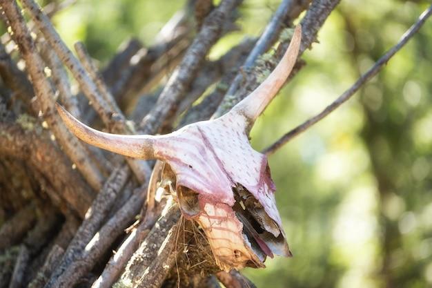 Barraca da tenda da tribo do nativo americano com crânio do búfalo.