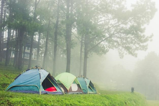 Barraca do turista na névoa & na névoa. acampar no pinhal.