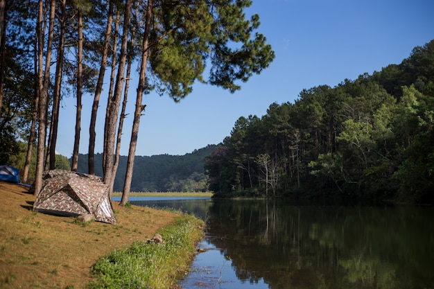 Barraca sob a floresta do pinho na manhã contra a luz solar brilhante, pungência-ung em tailândia.
