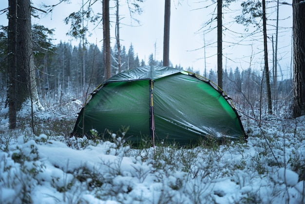 Barraca verde na floresta. neve fresca caiu.