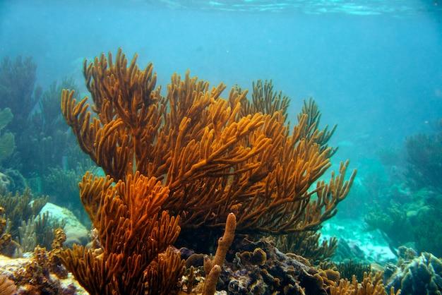 Barreira mesoamericana grande recife maia