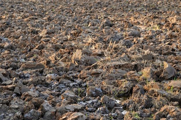 Barro seco rachado em campos de arroz na época de seca