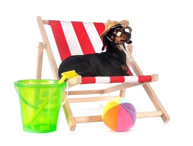Bassê na cadeira de praia com balde e bola