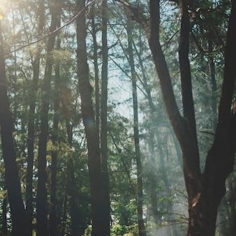 Bastante parque temporada solitária outono conceito caído
