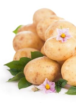 Batatas cruas com flores e folhas isoladas no fundo branco
