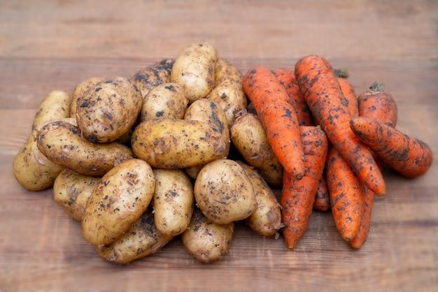 Batatas frescas e cenouras escavadas no chão. outono colheita de batatas.