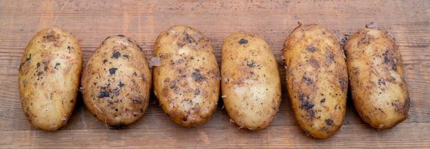 Batatas frescas escavadas no chão. outono colheita de batatas.