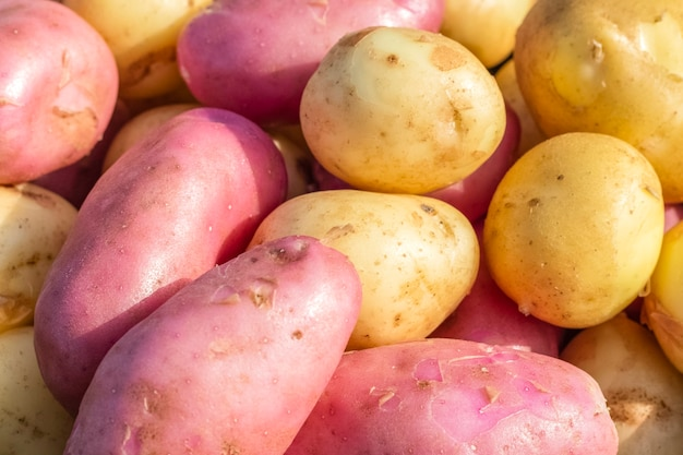 Batatas frescas orgânicas brancas e vermelhas no mercado. feche de textura de batata. fundo, textura