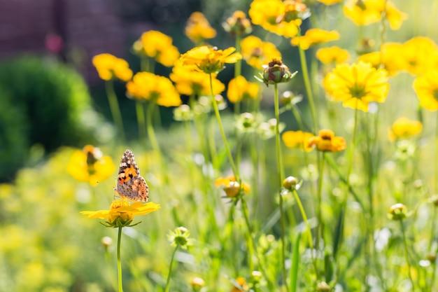 Batterfly no flores amarelas no dia de verão ensolarado.
