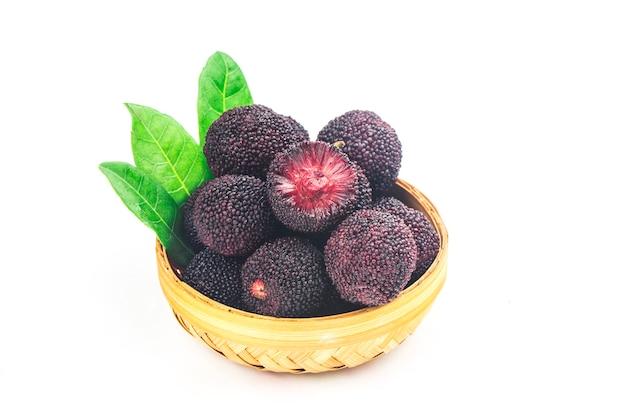 Bayberry fresco em fundo branco