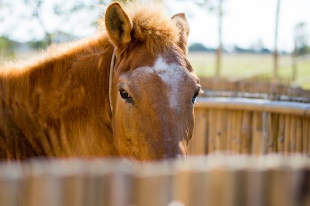 Beauitiful cavalo marrom no estábulo de madeira