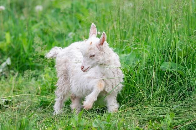 Bebé branco na grama em um dia ensolarado