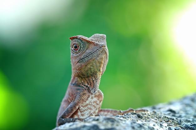 Bebê floresta dragão lagarto no jardim
