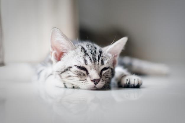 Bebê gato preguiçoso dormindo no chão