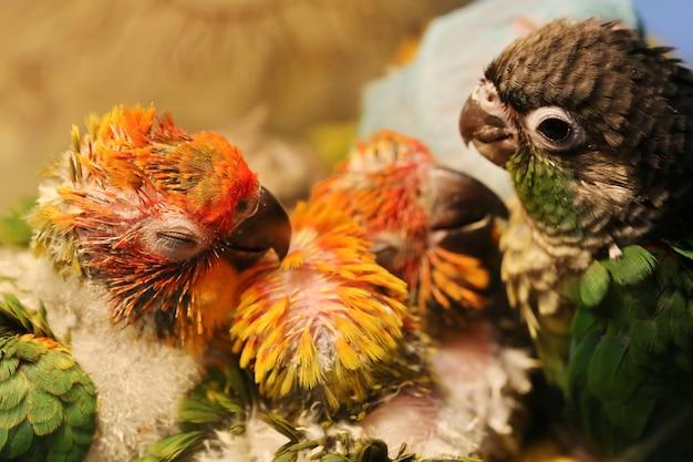 Bebê papagaio