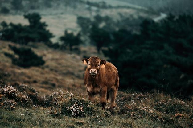 Bebê vaca marrom na selva