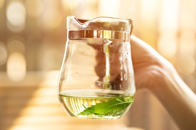 Bebida quente saudável chá de cannabis sativa de folhas de maconha, chá de ervas medicinais de planta verde da natureza.