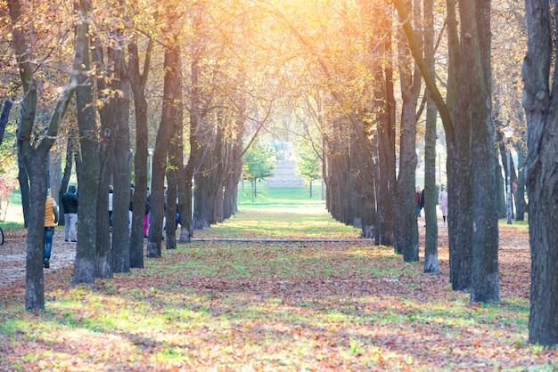 Beco central em parque outonal com árvores e folhas coloridas caídas