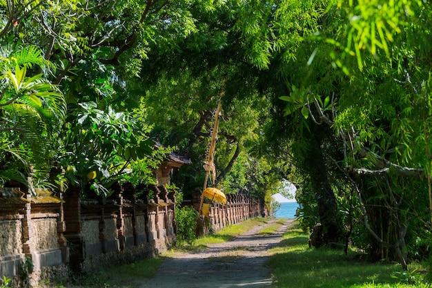 Beco das árvores em ilha tropical, bali