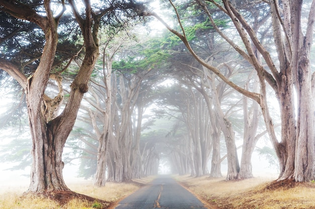 Beco das árvores em manhã nublada