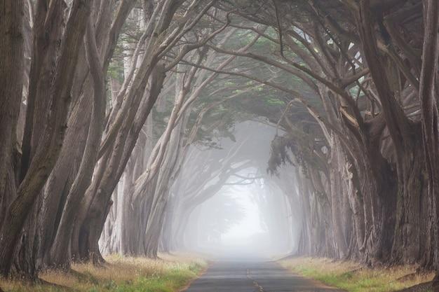 Beco das árvores enevoadas no nevoeiro.
