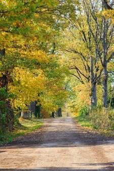 Beco de árvore e a estrada em um dia ensolarado no outono em outubro