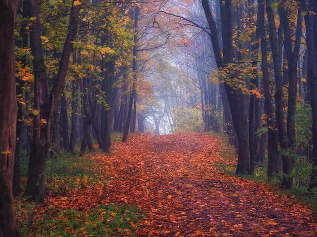 Beco de bordo com folhas caídas em uma floresta mística. fabulosa paisagem enevoada de outono.