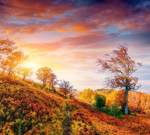Beco de outono. nuvens cumulus fantásticas, céu dramático. pôr do sol.