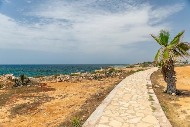 Beco de pedra passa ao longo da costa árida perto da palmeira.