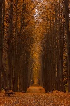 Beco de tília amarelo nublado dia de outono