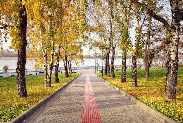 Beco na margem do rio ob troncos de bétula com folhagem de outono ao longo do caminho de pedestres