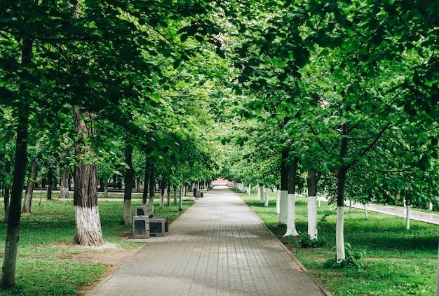 Beco no parque verde da cidade com grama e árvores, ninguém.