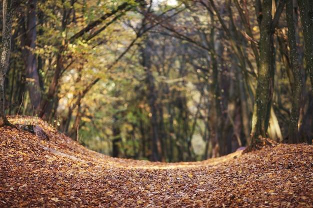 Beco romântico em um parque com árvores coloridas. fundo natural de outono