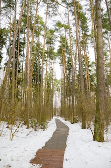 Beco sinuoso na floresta de inverno