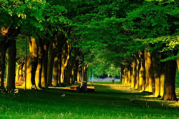 Beco verde com árvores e folhagem de folhas exuberantes no verão ao pôr do sol