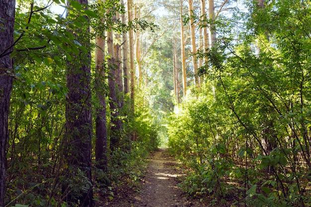 Beco verde com trilha rural