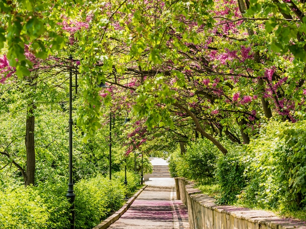 Beco verde no parque primavera