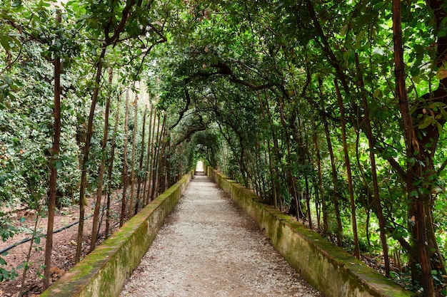 Beco verde nos jardins boboli, florença, itália
