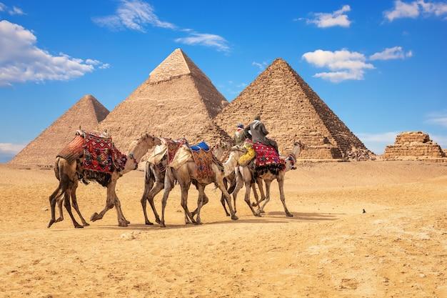 Beduínos em camelos em frente às famosas pirâmides de gizé, no egito.