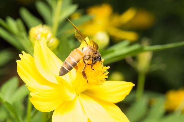 Bee procurando néctar
