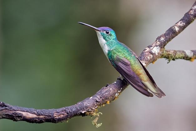Beija-flor colorido descansando em um galho