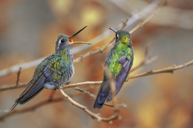 Beija-flores empoleirados no galho de uma árvore