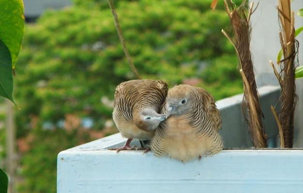 Beijando pássaros