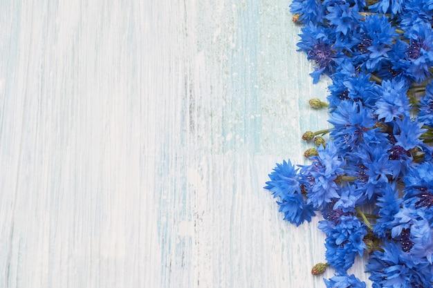 Beira azul da centáurea no fundo azul.