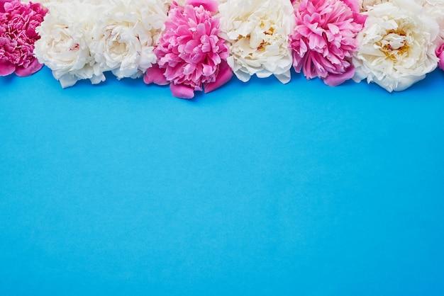 Beira branca e cor-de-rosa das peônias no azul. copie o espaço, vista de cima. feriado.