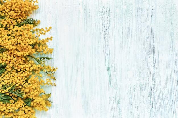 Beira das flores da mimosa no fundo azul. copie o espaço, vista de cima.