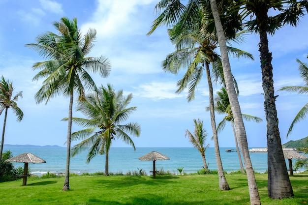 Beira-mar de árvore de coco.