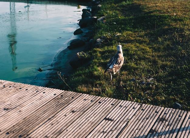 Beira-rio com ponte de cais de madeira, frente de água e pássaro gaivota Foto Premium