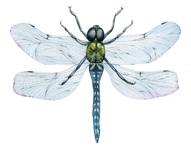 Bela aquarela voando libélula verde com asas azuis. inseto desenhado à mão.